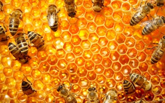 Nowy lek dla pszczół z UMSC